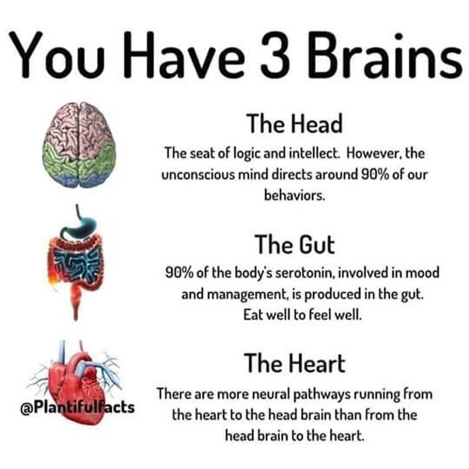Your Three Brains